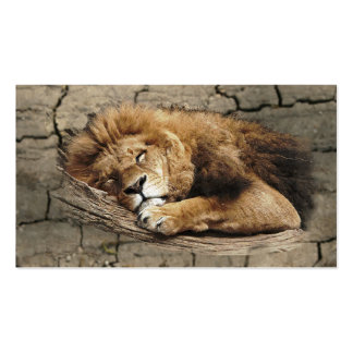 Lion sleeping Animal wild Cat stone Double-Sided Standard Business Cards (Pack Of 100)