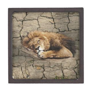 Lion sleeping Animal wild Cat stone Jewelry Box