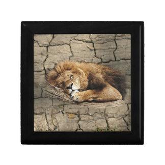 Lion sleeping Animal wild Cat stone Keepsake Box