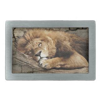 Lion sleeping Animal wild Cat stone Rectangular Belt Buckle