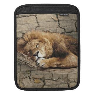 Lion sleeping Animal wild Cat stone Sleeve For iPads