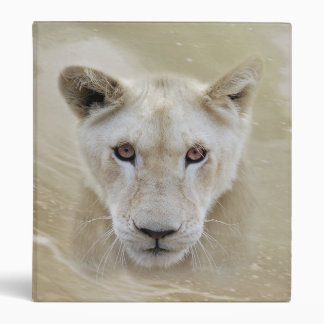 Lion spirit warrior 3 ring binders