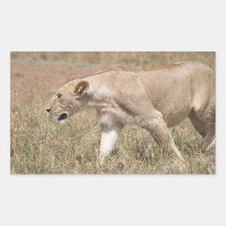 lion stalk rectangular sticker