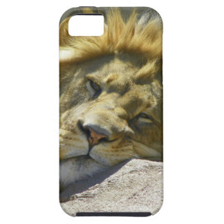 lion stare at you iPhone SE/5/5s case