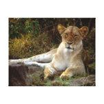 Lion Stretched Canvas Prints