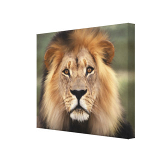 Lion - The King of The Jungle Canvas Print
