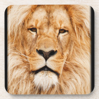 LION THE WILD COASTER