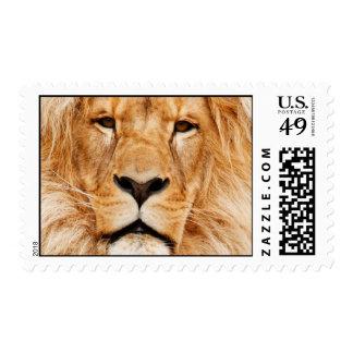LION THE WILD POSTAGE STAMP