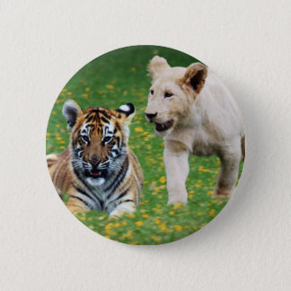 Lion & tiger cubs at play button