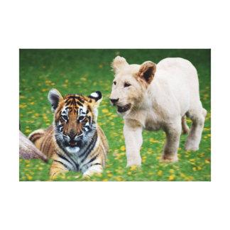 Lion & tiger cubs at play canvas print