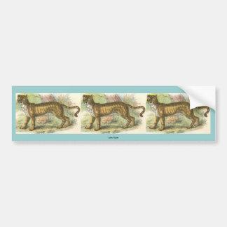 Lion-Tiger  (Felis leo Felis tigris hybrid) Bumper Sticker