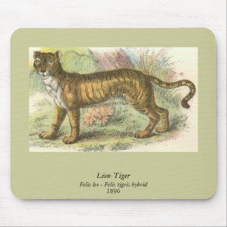 Lion-Tiger  (Felis leo Felis tigris hybrid) Mouse Pad
