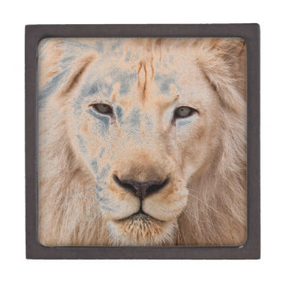 lion unleased jewelry box