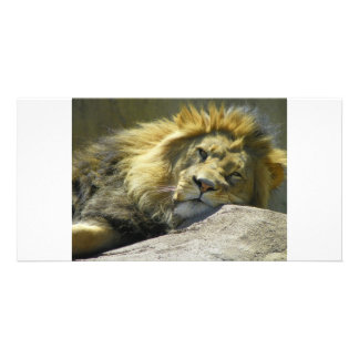 Lion up close photo greeting card