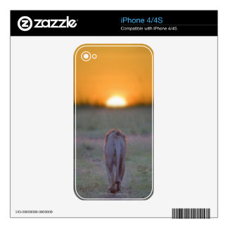 Lion walking decal for iPhone 4