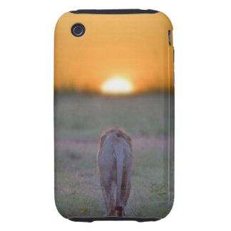 Lion walking iPhone 3 tough cover