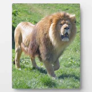 Lion walking on grass plaque