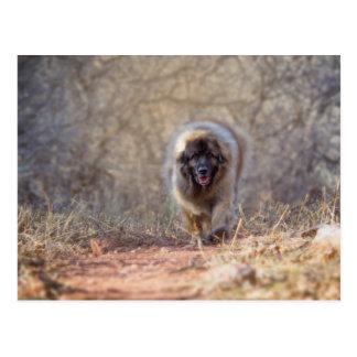 Lion walking postcard