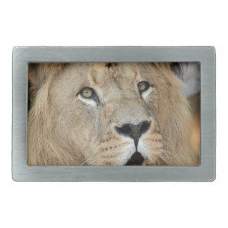 Lion Wild Animal Cat Belt Buckle