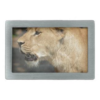 Lion Wild Animal Cat Belt Buckles