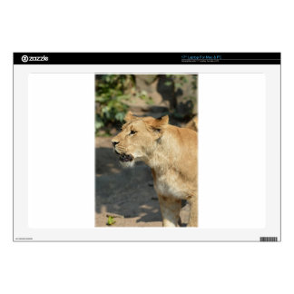 "Lion Wild Animal Cat 17"" Laptop Decal"