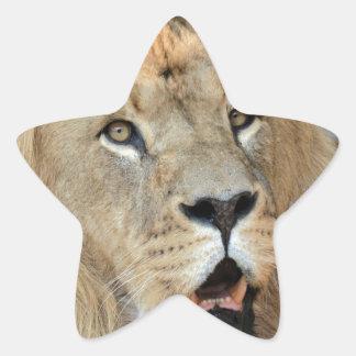 Lion Wild Animal Cat Star Stickers