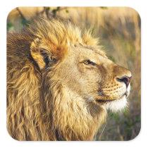 Lion Wild Animal Wildlife Safari Square Sticker