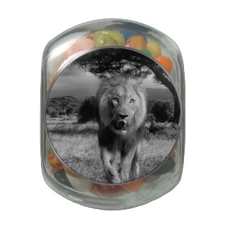 Lion Wildcat Jelly Belly Candy Jar