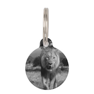Lion Wildcat Pet ID Tag