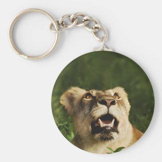 Lion wildlife safari keychains & keyrings