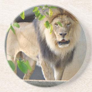 Lion Wildlife Sandstone Coaster