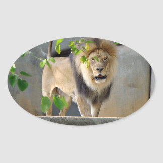 Lion Wildlife Sticker