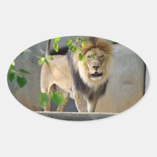 Lion Wildlife Sticker