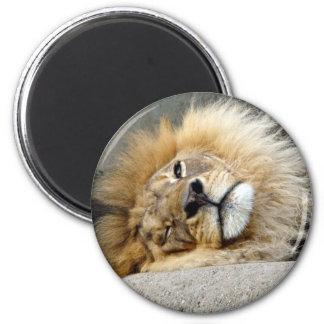 Lion Wink Magnet