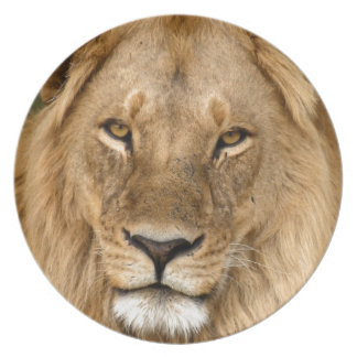 Lion With Great Mane Dinner Plate