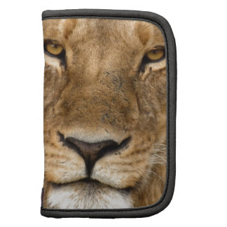 Lion With Great Mane Folio Planners