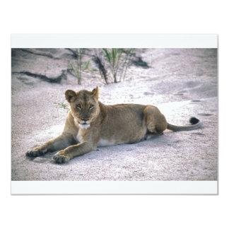 lioness837 4.25x5.5 paper invitation card