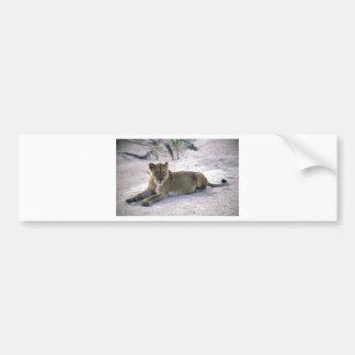 lioness837 bumper stickers