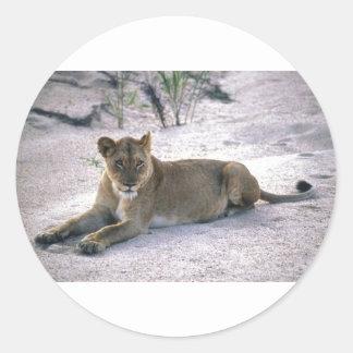 lioness837 pegatina redonda