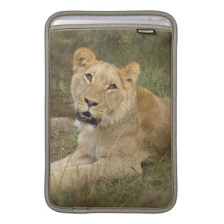 """Lioness 11"""" MacBook Sleeve"""