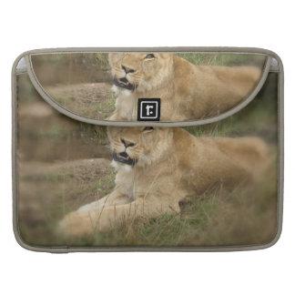 "Lioness 15"" MacBook Sleeve MacBook Pro Sleeves"