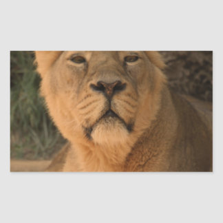 lioness 215A2 Rectangle Stickers
