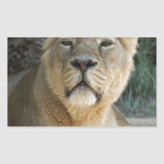 lioness 215A Rectangular Sticker