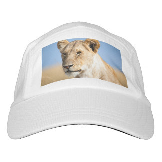 Lioness against blue sky headsweats hat
