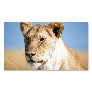 Lioness against blue sky magnetic business card