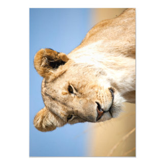 Lioness against blue sky magnetic card
