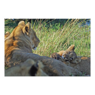 LIONESS AND CUB PHOTO PRINT