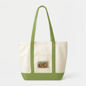 Lioness and Cubs, Felis leo bag