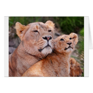 Lioness and Lion Cub Rest Before The Hunt Card