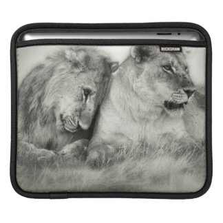 Lioness and son sitting and nuzzlingin Botswana Sleeve For iPads